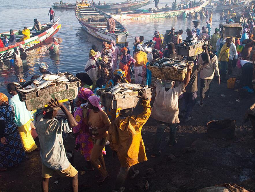 Fish market in Senegal