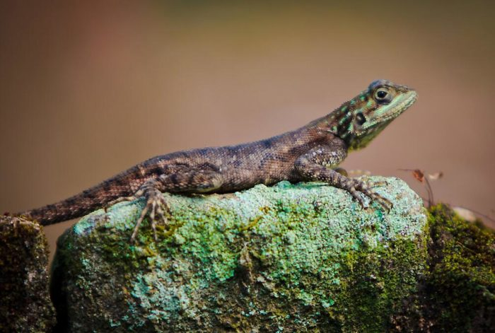 Sierra Leone has a rich, tropical wildlife
