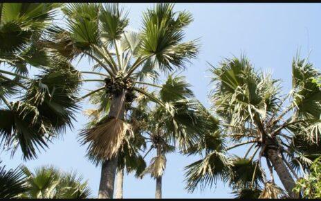 Gambia Landmarks