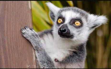 Madagascar Landmarks