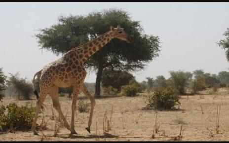 Niger Landmarks