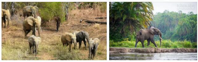 Benin Wildlife